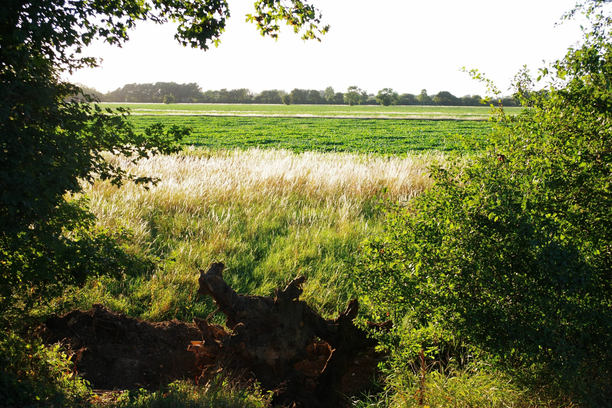 agricultural fields viewed through a gap in a line of trees and a hedge